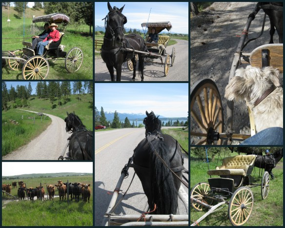 Buggy collage
