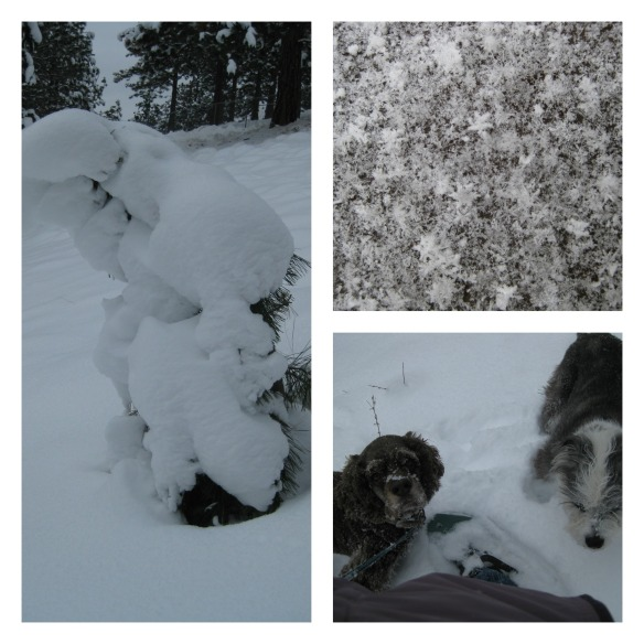 snow Collage
