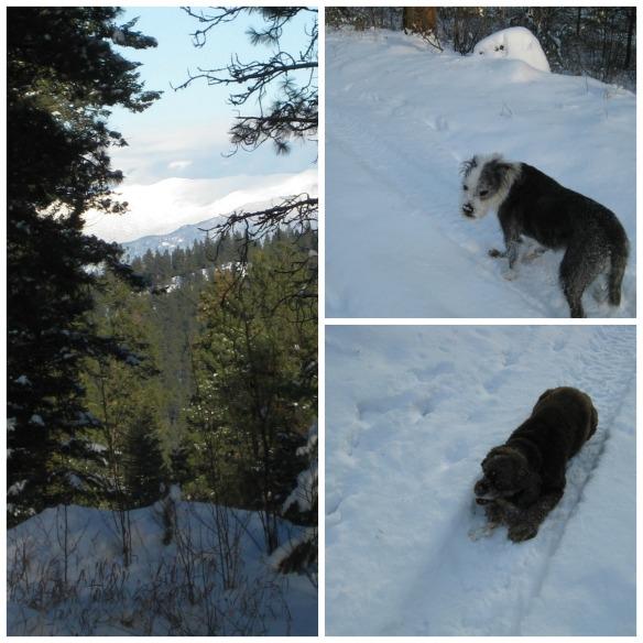 Snowshoe Collage